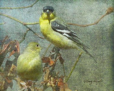 Photograph - Goldfinch Pair by Cindy Wright