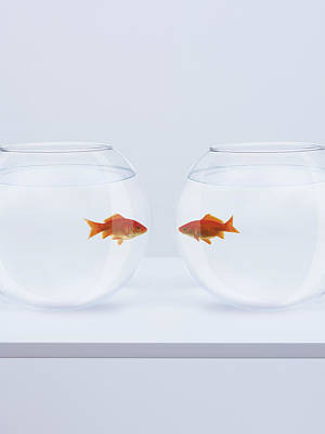 Goldfish In Separate Fishbowls Looking Face To Face Art Print by Adam Gault