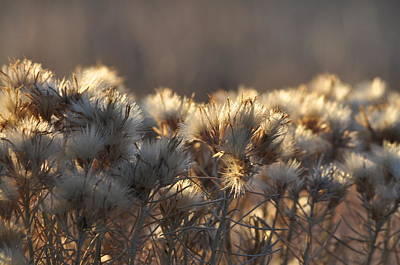Photograph - Gone To Seed by Fran Riley