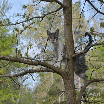 Photograph - Goober The Tree Climber by Donna Brown