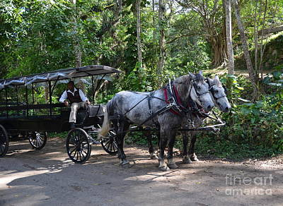 Photograph - Good Hope Estate Horse And Carriage by Carol  Bradley