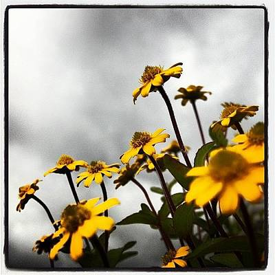 Daisies Photograph - Good Morning by Elizabeth Marchant