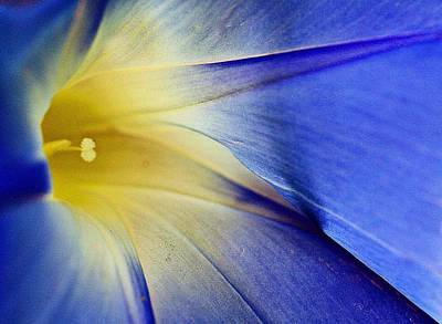 Digital Art - Good Morning Glory by Carrie OBrien Sibley