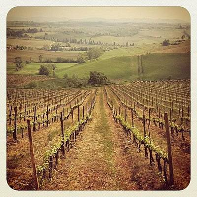 Vineyard Photograph - Good Morning! Heres One From Tuscany by Gabriel Kang