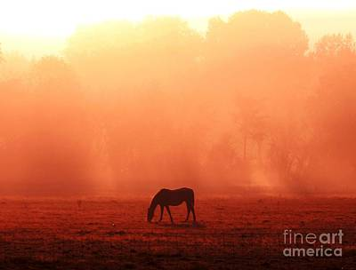 Good Morning Horse Art Print