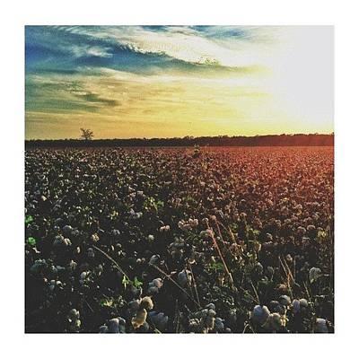 Wall Art - Photograph - Good Ol' Cotton Fields by Taylor Flynn