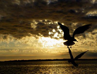Photograph - Goodnight Gulls by Judy Wanamaker