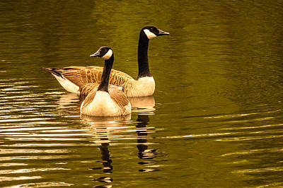 Ken Beatty Photograph - Goose Love by Ken Beatty