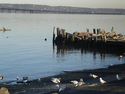 Photograph - Gooses By Tapan Zee Bridge by Viola El