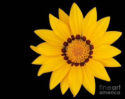 Photograph - Gorgeous Gazania by Sabrina L Ryan