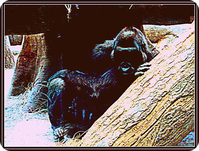 Photograph - Gorilla-6 by Anand Swaroop Manchiraju