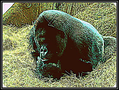 Photograph - Gorilla--8 by Anand Swaroop Manchiraju