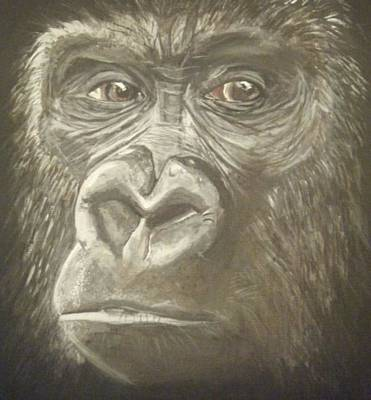 Cute Monkey Drawing - Gorilla by Catherine Eager