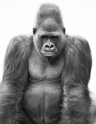 Gorilla Art Print by Darren Greenwood