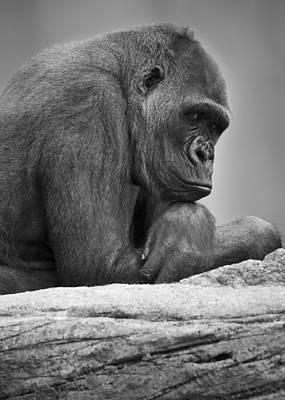 Gorilla Portrait Art Print by Darren Greenwood