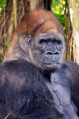 Gorilla Posing Art Print by Joe Myeress