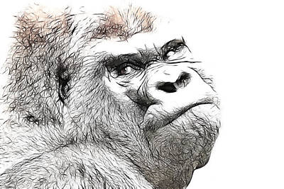 Gorilla Original by Tilly Williams