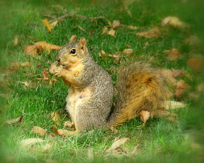 Photograph - Got Nuts by Cindy Wright