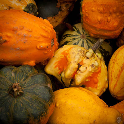 Cucurbitaceae Photograph - Gourds  by Matt Dobson
