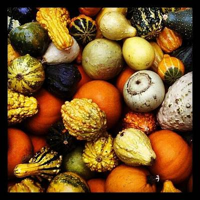 Still Life Wall Art - Photograph - Gourds by Travel Designed