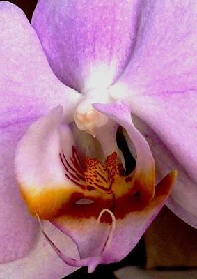 Graceful Bird Orchid Art Print