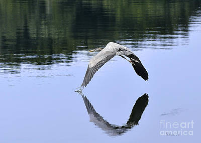 Art Print featuring the photograph Graceful Heron by Nava Thompson