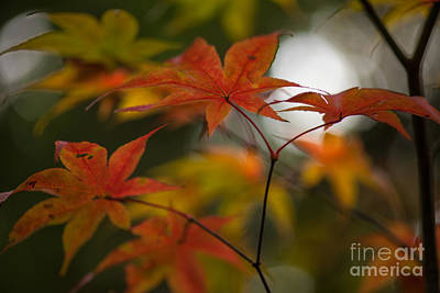 Red Leaves Photograph - Graceful Layers by Mike Reid