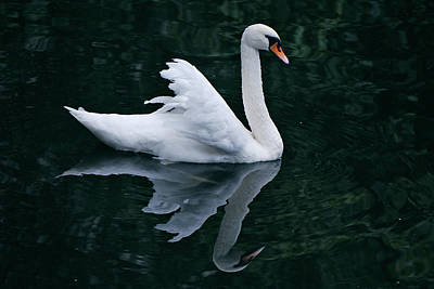 Jeka World Photograph - Graceful Swan Reflecting On One Of Bruges Canals by Jeff Rose