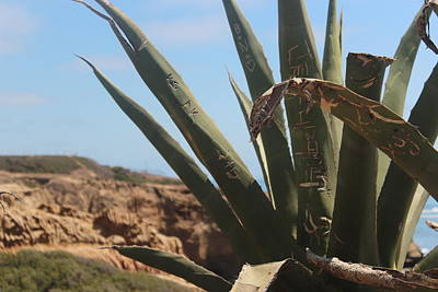 Graffiti Cactus Art Print by Martin Krizik
