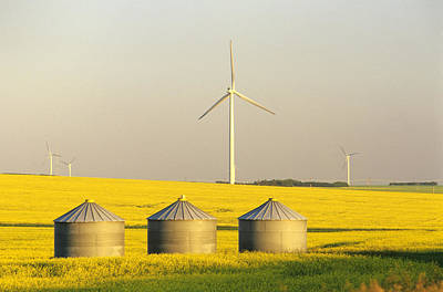 Jul08 Photograph - Grain Bins And Wind Turbines In Canola by Dave Reede