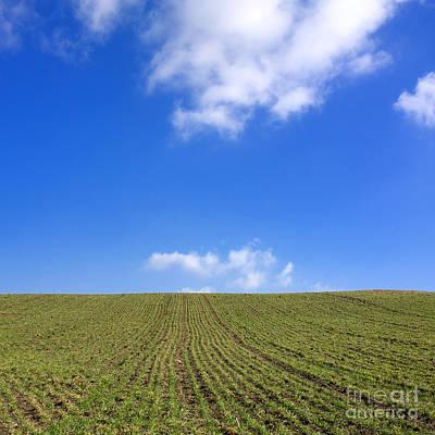 Grain Field. Auvergne. France Art Print by Bernard Jaubert