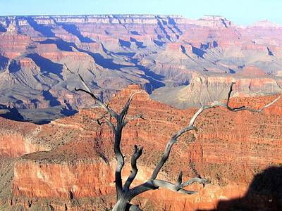 Photograph - Grand Canyon 25 by Will Borden