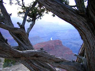 Photograph - Grand Canyon 45 by Will Borden