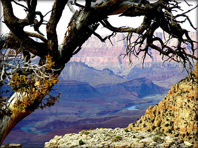 Grand Canyon 8 Art Print by Tanya  Searcy