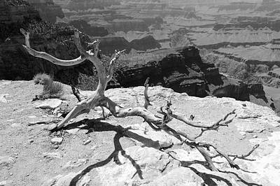 Photograph - Grand Canyon Branch by Julie Niemela