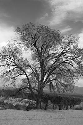 Grand Canyon Life Tree Art Print