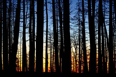 Photograph - Grand Canyon North Rim Sunset by Wes and Dotty Weber