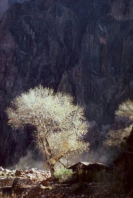 Grand Canyon Reflected Tree Print by Dave Dilli