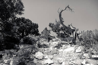 Photograph - Grand Canyon Tree by Julie Niemela