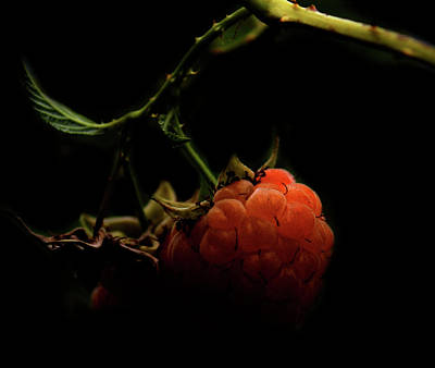 Digital Nudes Photograph - Grandmas Berries by Empty Wall