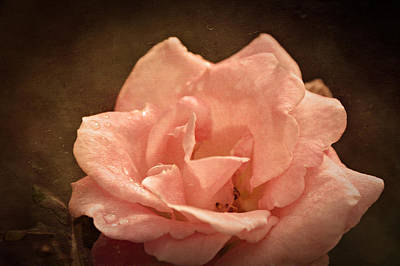 Grandmas Bloom Art Print by Terrie Taylor
