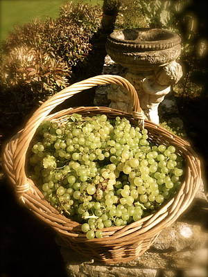 Grape Harvest Art Print