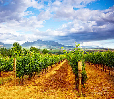 Blue Grapes Photograph - Grape Valley by Anna Om
