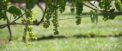 Pop Art - Grape Vine 1 by Mike Mooney