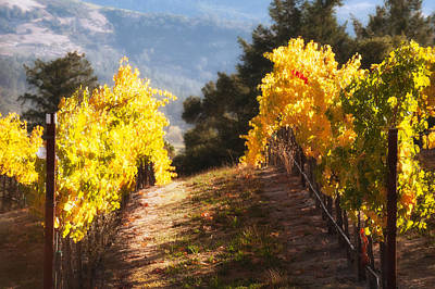 Photograph - Grape Vineyard - Fall by Gary Rose
