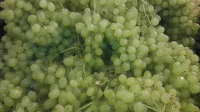 Photograph - Grapes 1 by Paul SEQUENCE Ferguson             sequence dot net