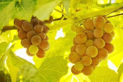 Vino Photograph - Grapes A Fine Art Photography Print And Canvas Art by James BO  Insogna