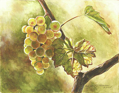 Grapevine Drawing - Grapes by Deb Richter