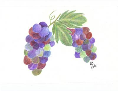 Blue Grapes Drawing - Grapes by DebiJeen Pencils