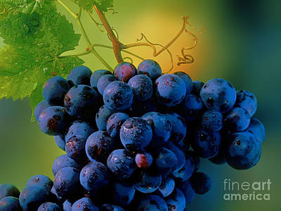 Grapes Original by Herb Paynter